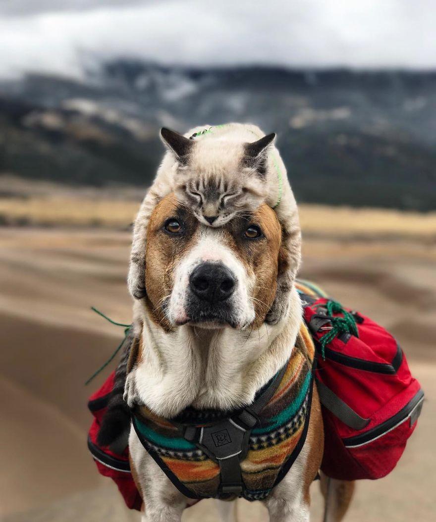 Кот и пес путешествуют вместе со своими хозяевами по Колорадо (10 фото)