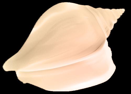 TP_SeaShell_02b.png