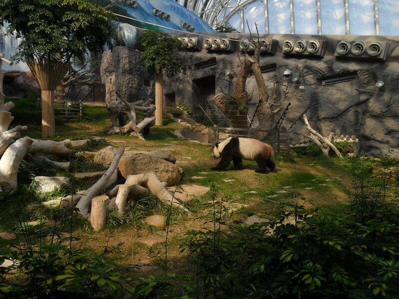 Панда в Макао