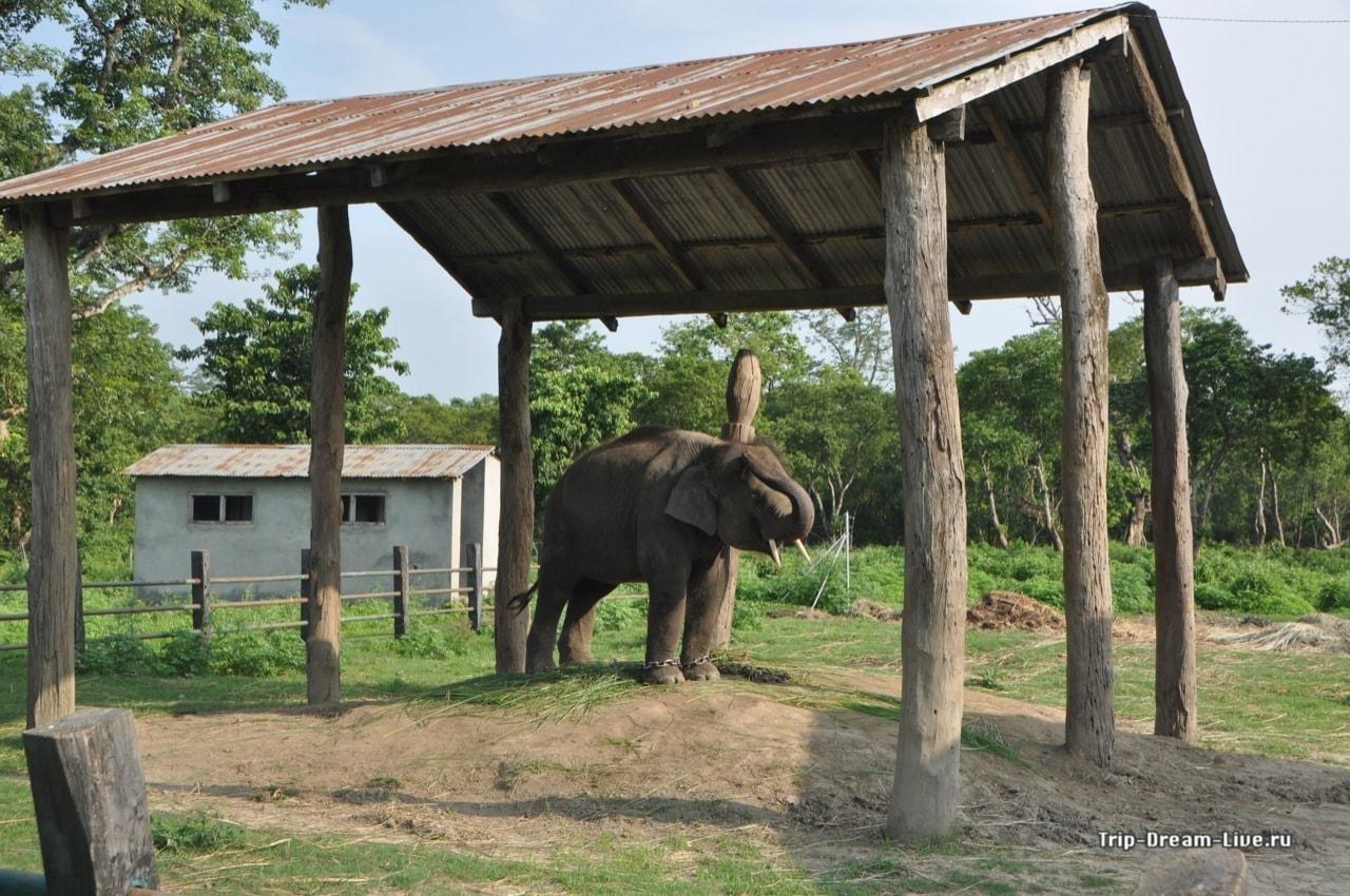 Центр разведения слонов
