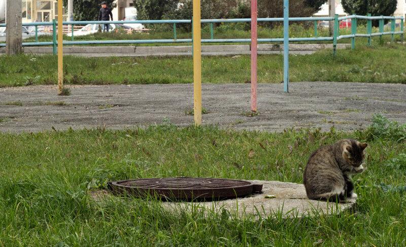 Кошка умывается у канализационного люка