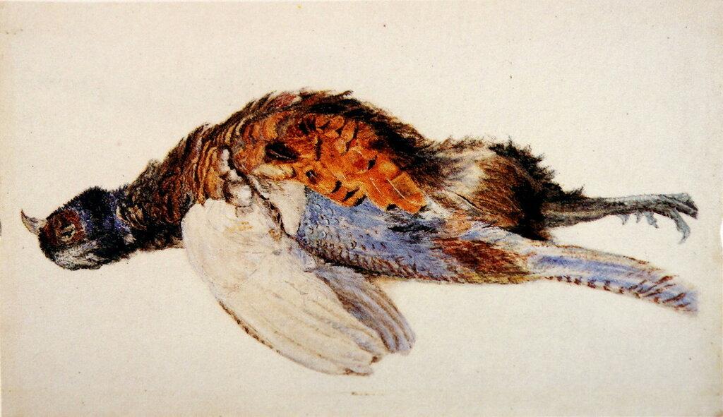 Dead_Pheasant_Ruskin1867.jpg