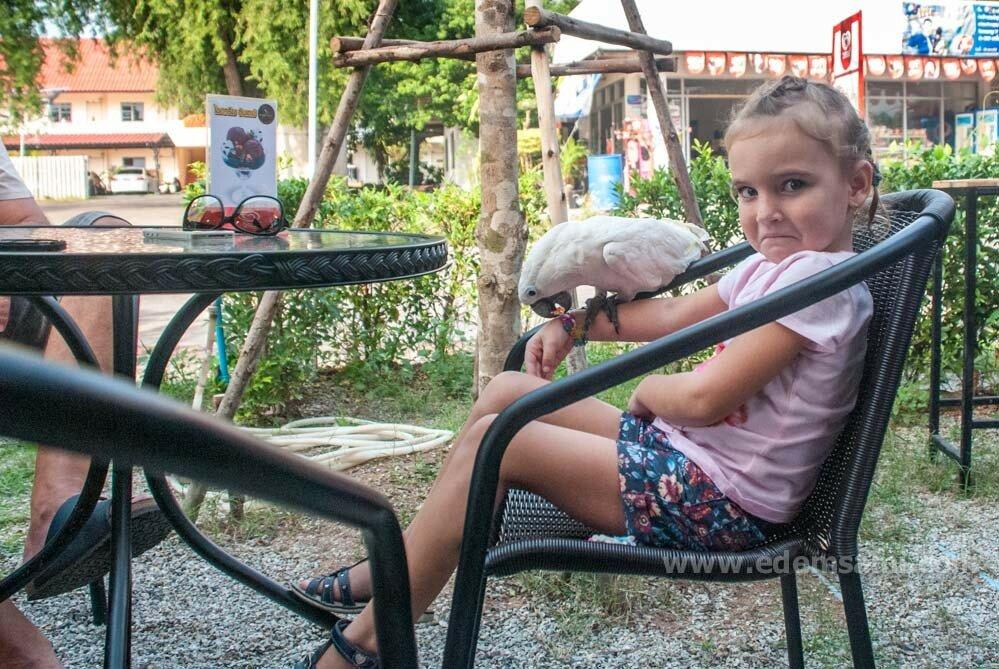 Попугай-кафе в Сираче