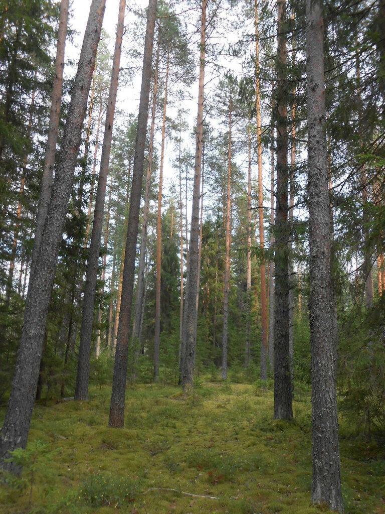 Лес близ деревни Едно