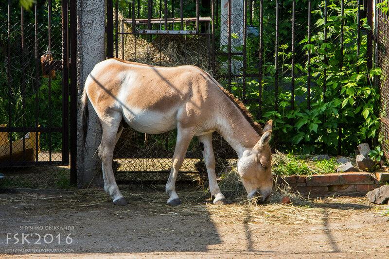 kharkiv_zoo-70.jpg
