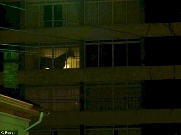 Интересно, что может такого стоять на балконе, что создает иллюзию коня в квартире?