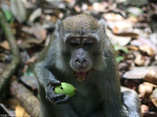 30. Дикие обезьяны в джунглях не дружелюбны. Рискуете внезапно стать покусанными. 31. На острове жив