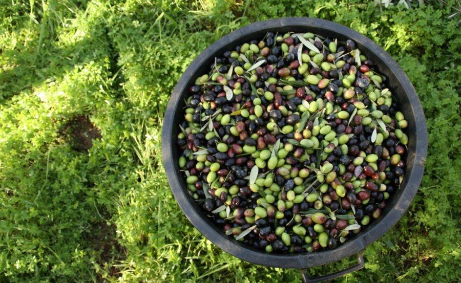 2. Греция Оливковое масло Еще одна страна, главным сувениром которой можно назвать продукт. Оливково