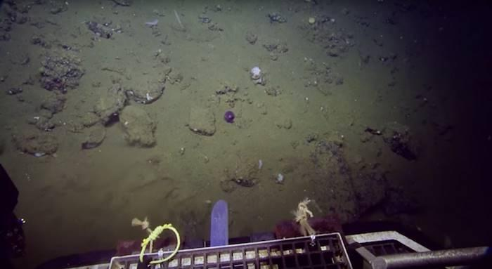 1. Но, как недавно подтвердили ученые, проводящие исследования у берегов Калифорнии, оно живое, хотя