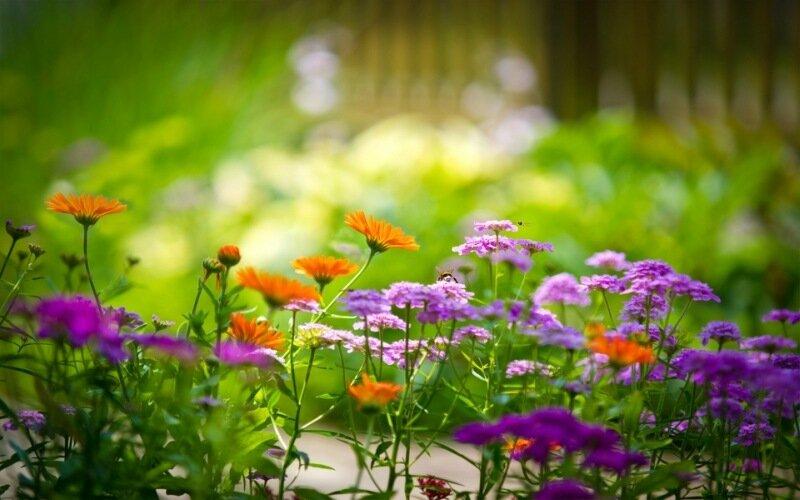 Полевые цветы. Стихи и фотографии