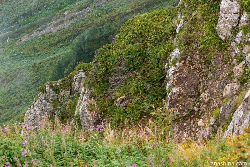 Альпийская растительность, Роза Хутор, Роза Пик, Красная Поляна