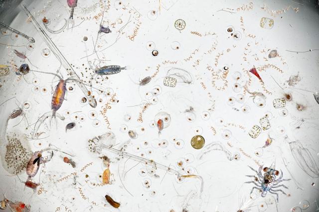 Капля морской воды, увеличенная в 25 раз