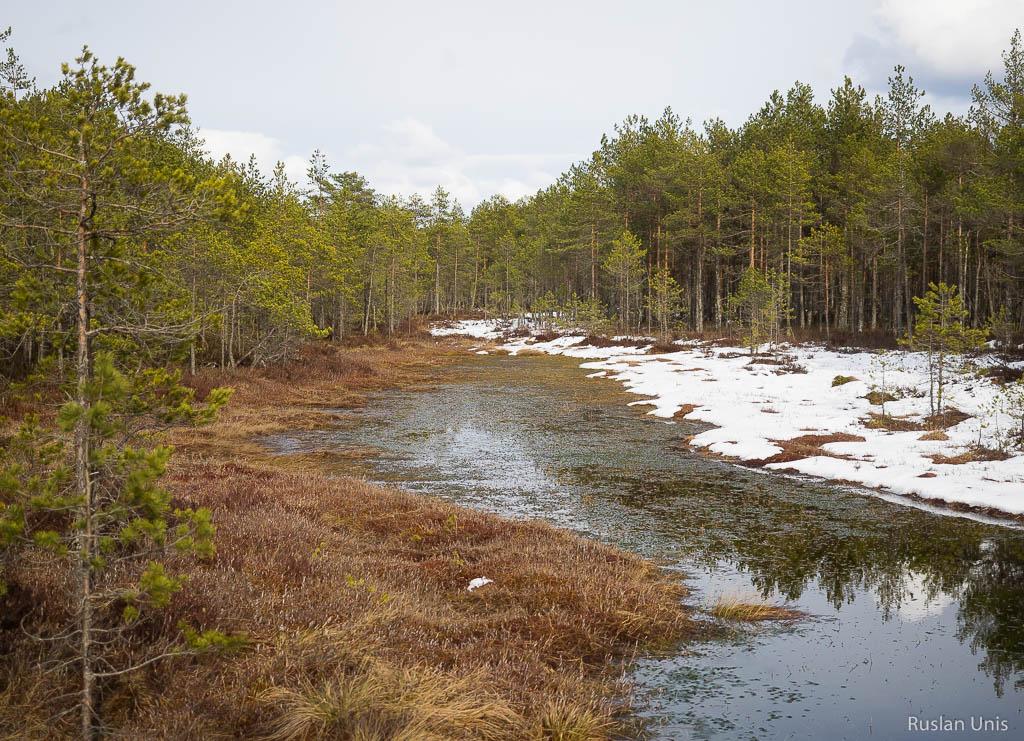 Эстонские болота