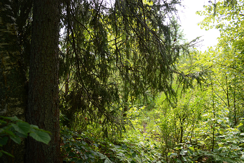 леса.jpg