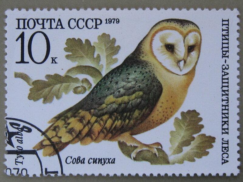 Сова сипуха (Tyto alba).
