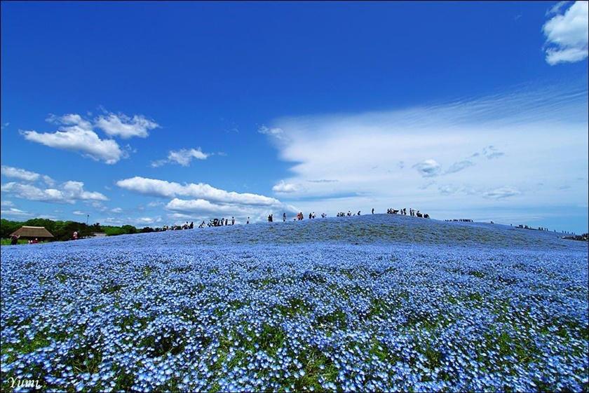 Живописный японский парк Хитати Кайхин 0 1422ba e9ae093c orig