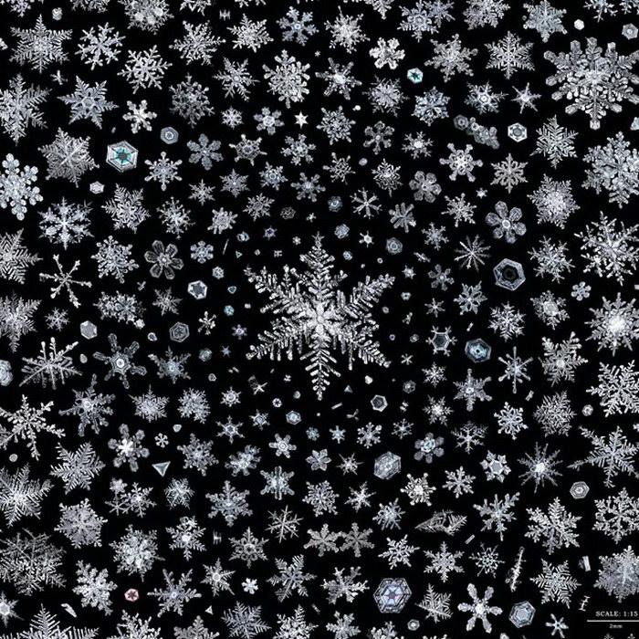Дон Комаречка (Don Komarechka) в течение нескольких лет собирал снежинки и фотографировал их на мощн