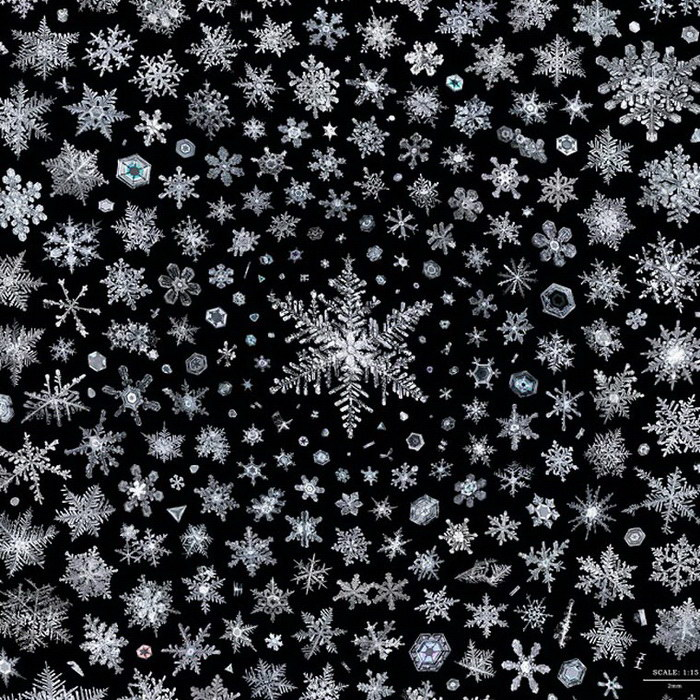 Хрупкая красота снежинок от Дона Комаречка (Don Komarechka) (11 фото)
