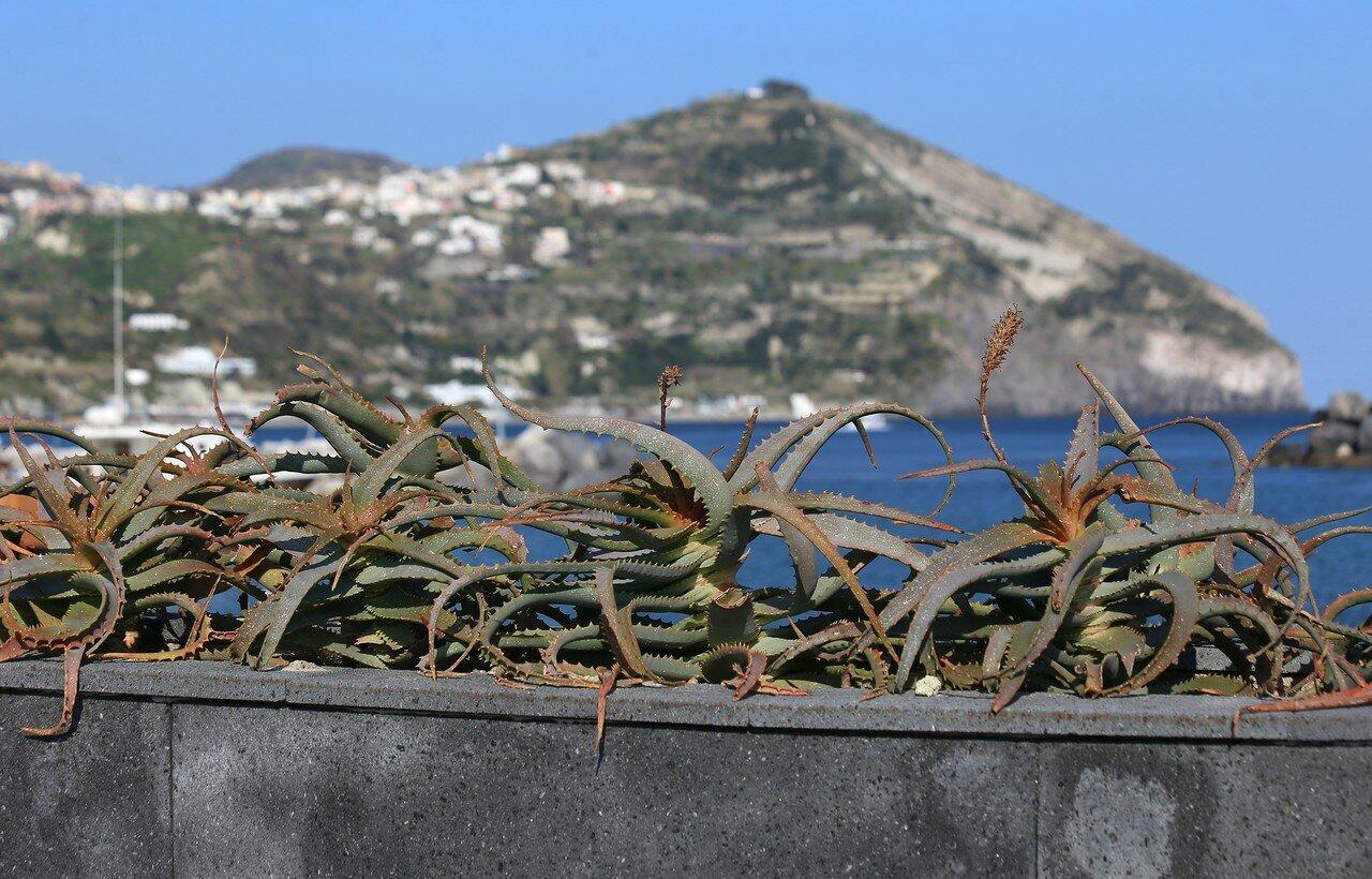 Ischia,Sant'Angelo. Seafront(Via S. Angelo)