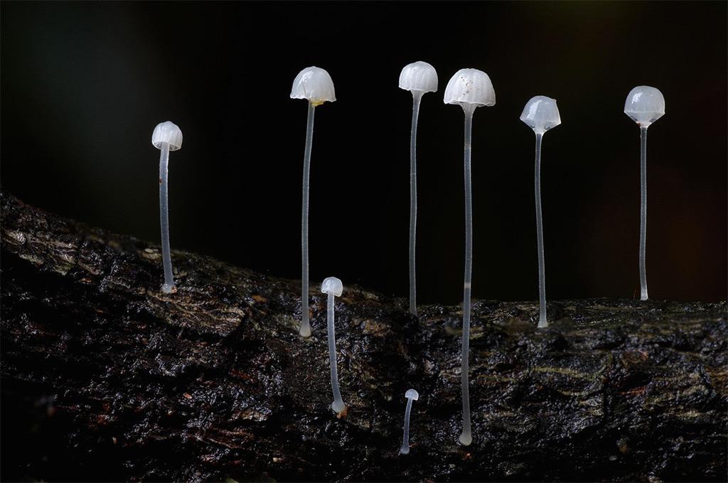 Фотографии субтропических грибов