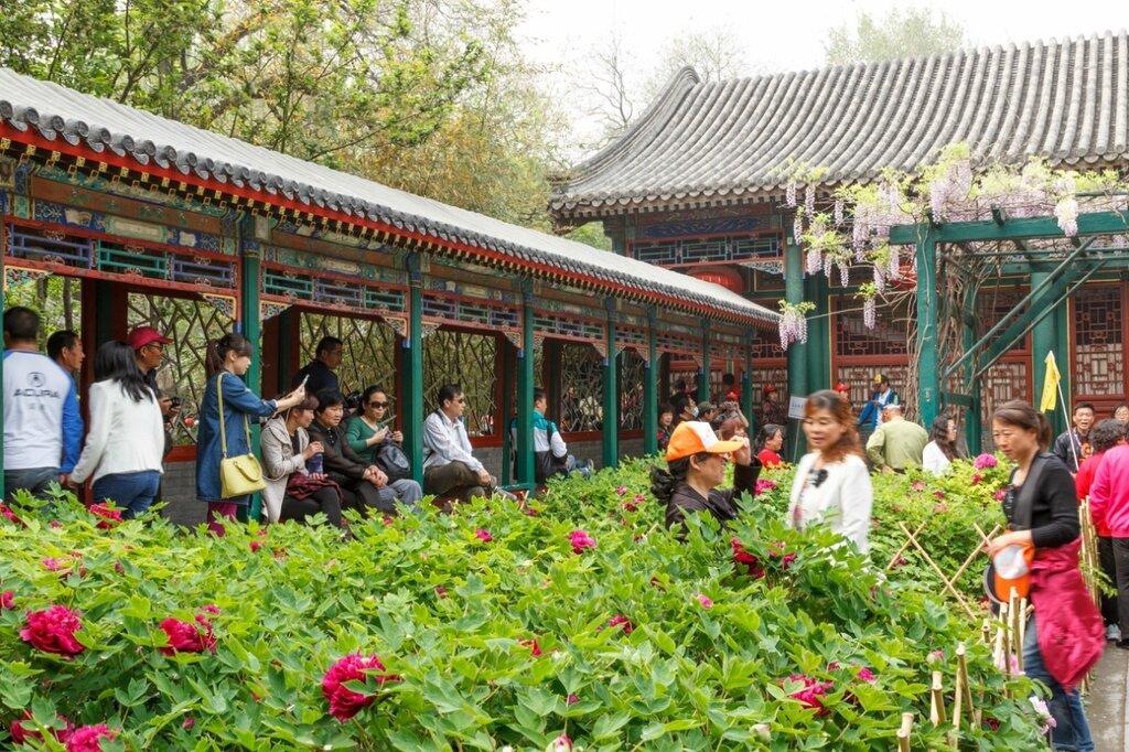 Пионы, резиденция князя Гуна, Пекин