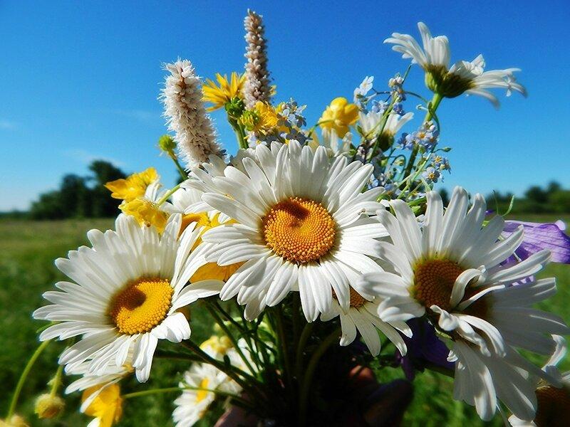 Букет цветов полевых