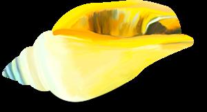 ракушки