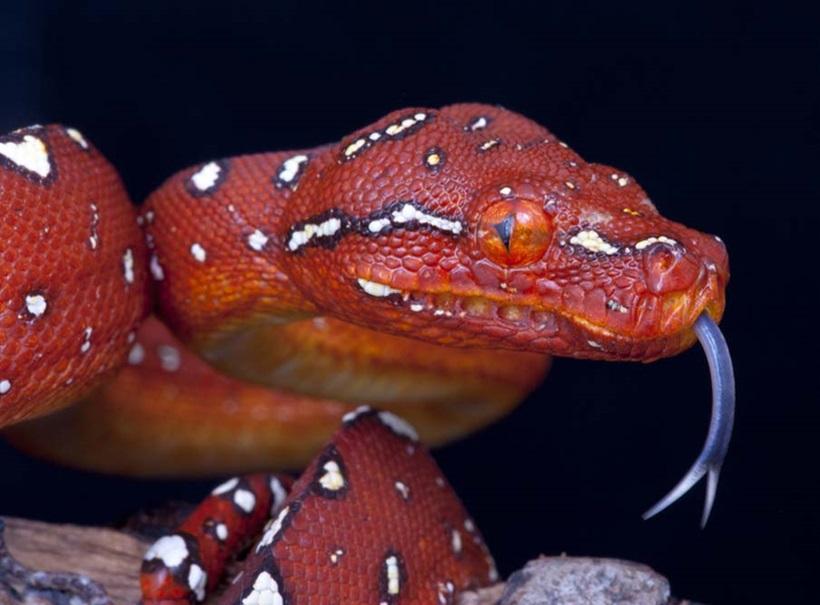 Пугающие фотографии змей 0 134acc 764d5cf9 orig