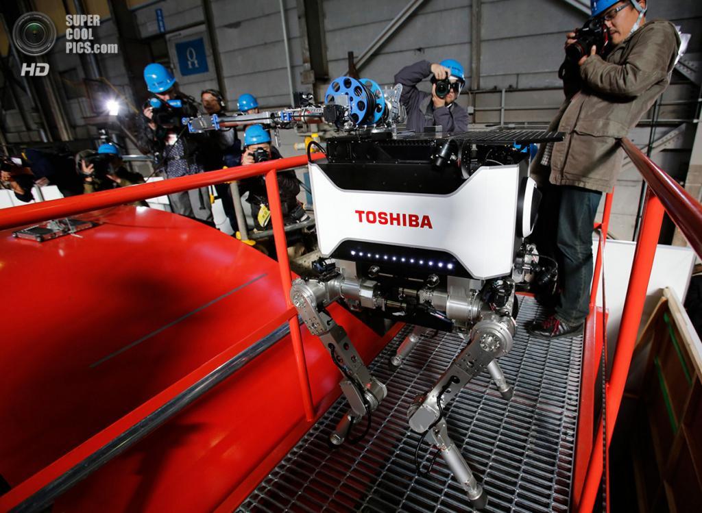 Япония. Йокогама, Канагава. 21 ноября 2012 года. Фотосессия нового четырёхногого робота Toshiba,