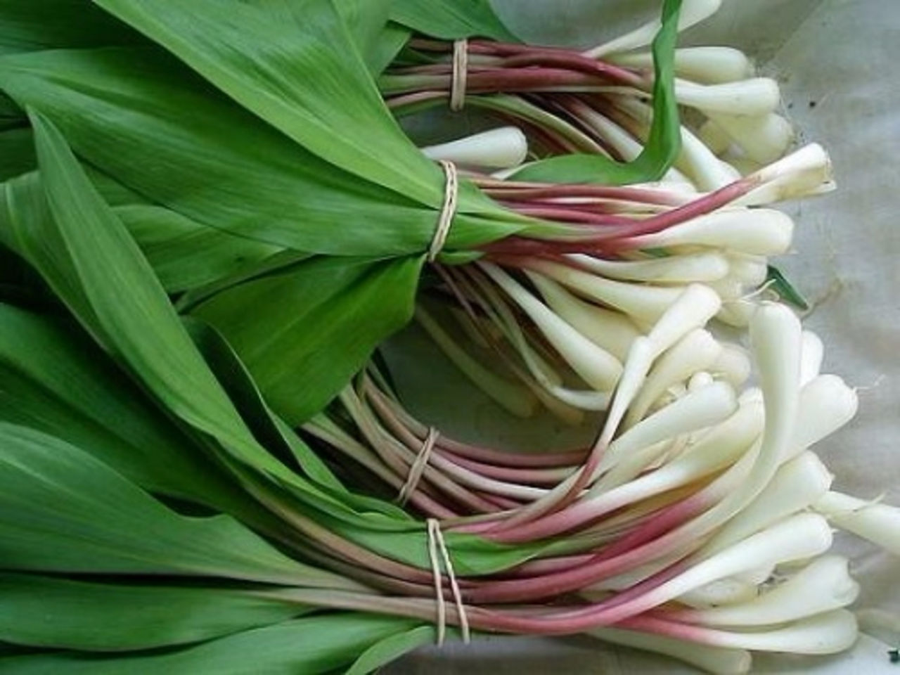 Многие овощеводы выращивают семейный лук не ради головок, которые получаются мелковатыми, а именно р