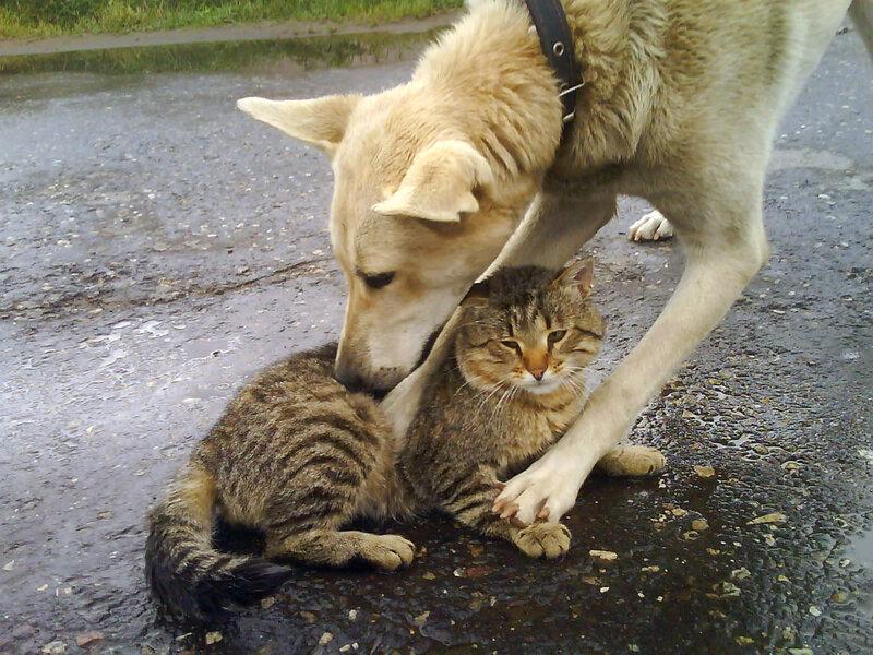 Кот и Букса:)
