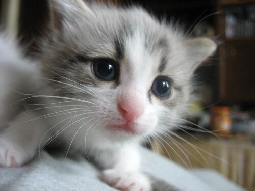 котята в хорошие руки 4