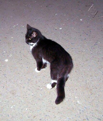 Котенок -джентельмен