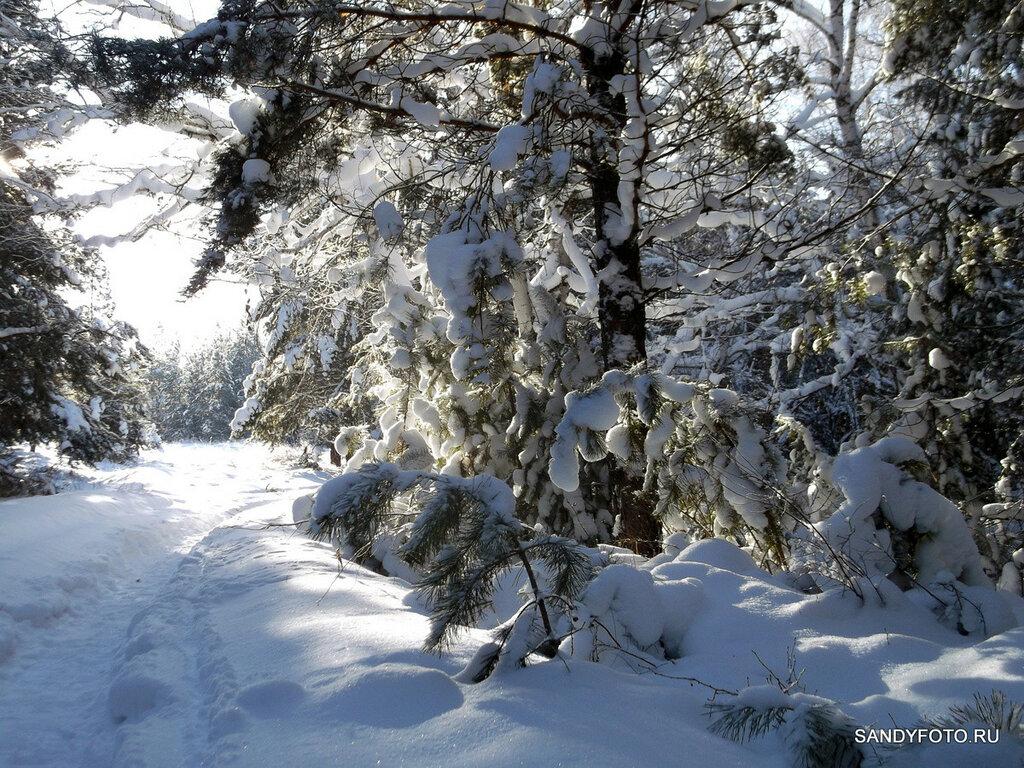 23 фотографии зимнего леса
