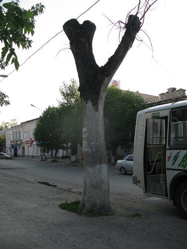 тополь - Курган