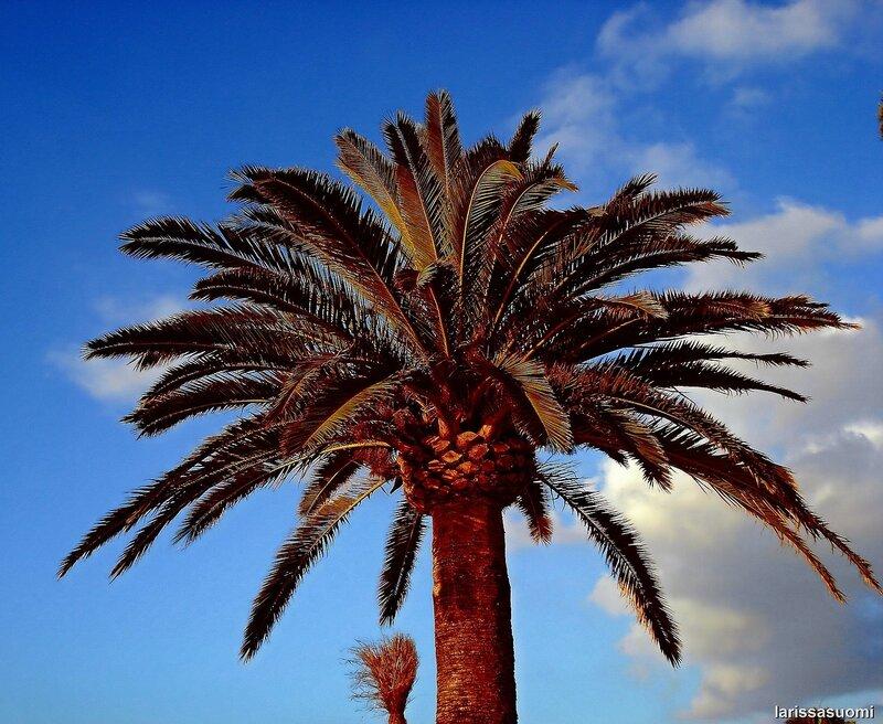 Пальма.