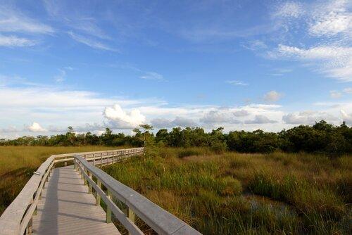 Нац. парк Эверглейдс, Флорида, США