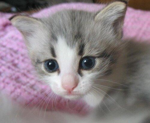 котята в хорошие руки 1
