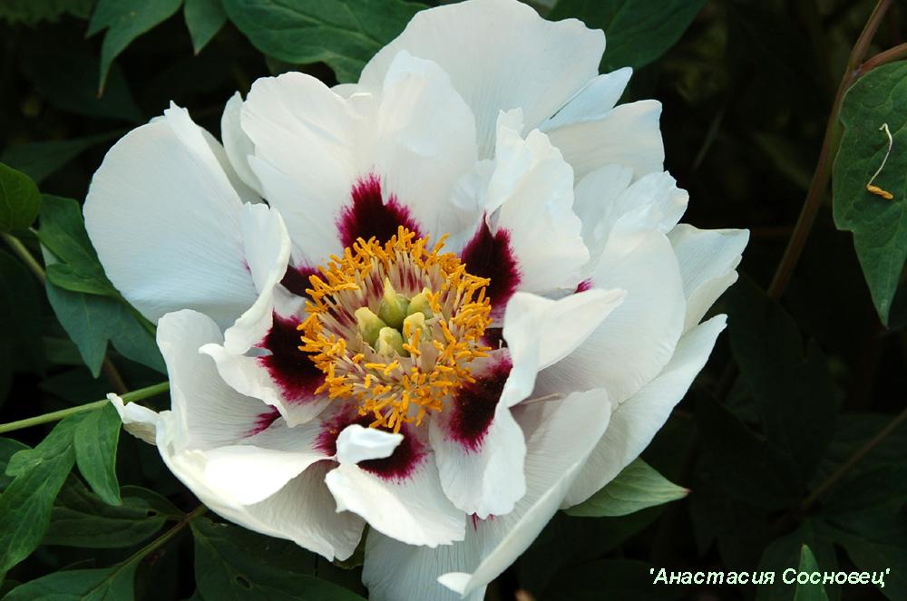 Комнатные растения - Цветочный рай для ...: flowersun.ucoz.ru/news/komnatnye_rastenija/3-0-3
