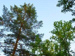 Лес и небо