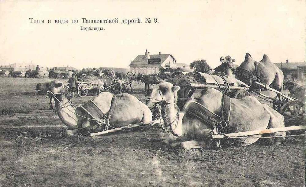 11. Верблюды.jpg