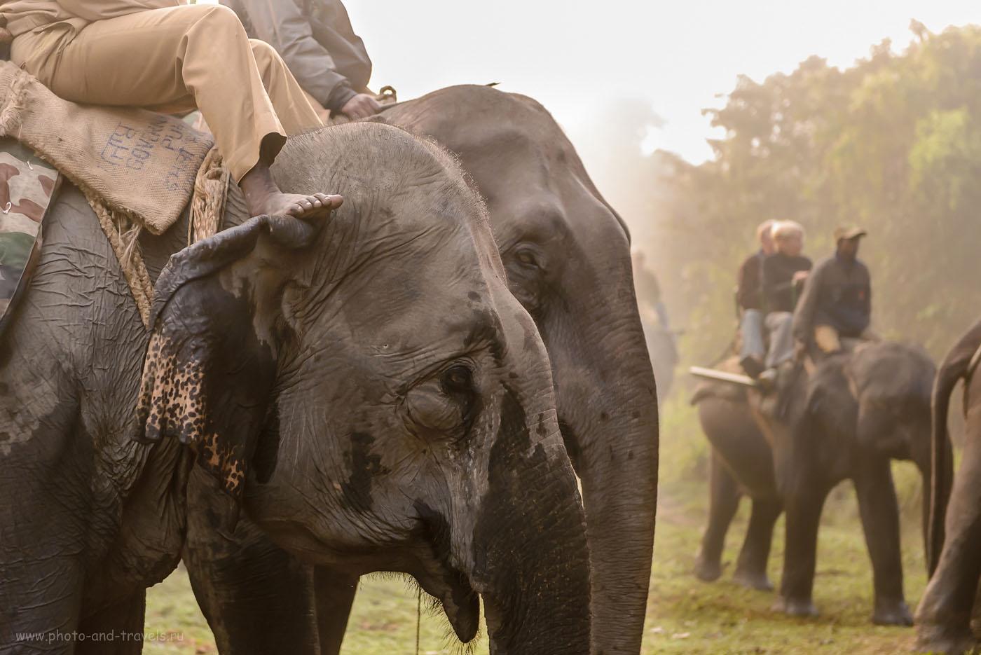 Фотография 4. Ждем начала фотосафари. Поездка в Kaziranga National Park в ноябре 2015. Отчеты туристов о самостоятельном путешествии в штат Ассам (Assam state). 1/800, -0.67, 3.5, 2500, 70. Nikon 24-70/2.8