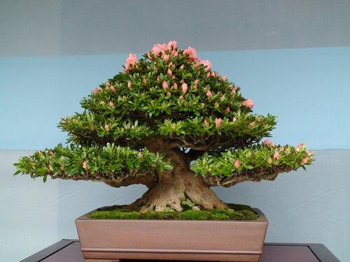 """Вышивка крестом. дерево.  Теги. бонсай.  200x150 крестов.  DMC, 40 цветов.  0. Схемы вышивки  """"дерево """" ."""