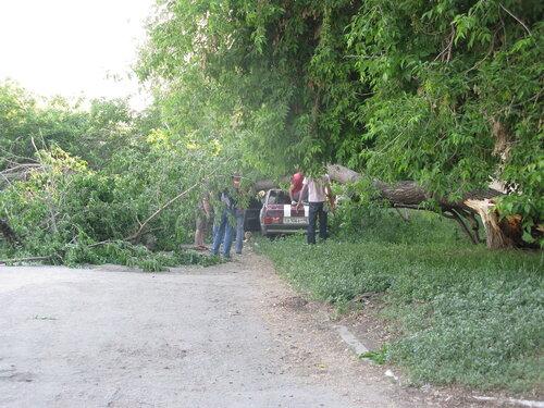 Крушение дерева об автомобиль - Курган - бар Маэстро 3