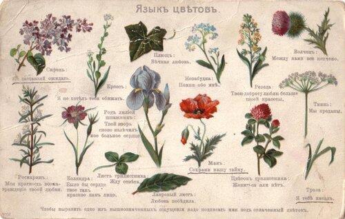 Язык цветов домашних
