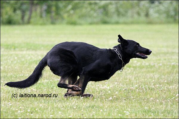 http://img-fotki.yandex.ru/get/4203/laitiona.64/0_340ec_57a2fc17_XL.jpg
