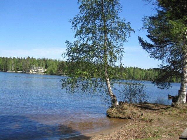 Береза на озере Уннукка
