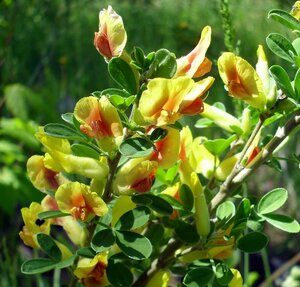 В Саду Комиссарова много диковинных для Сибири растений
