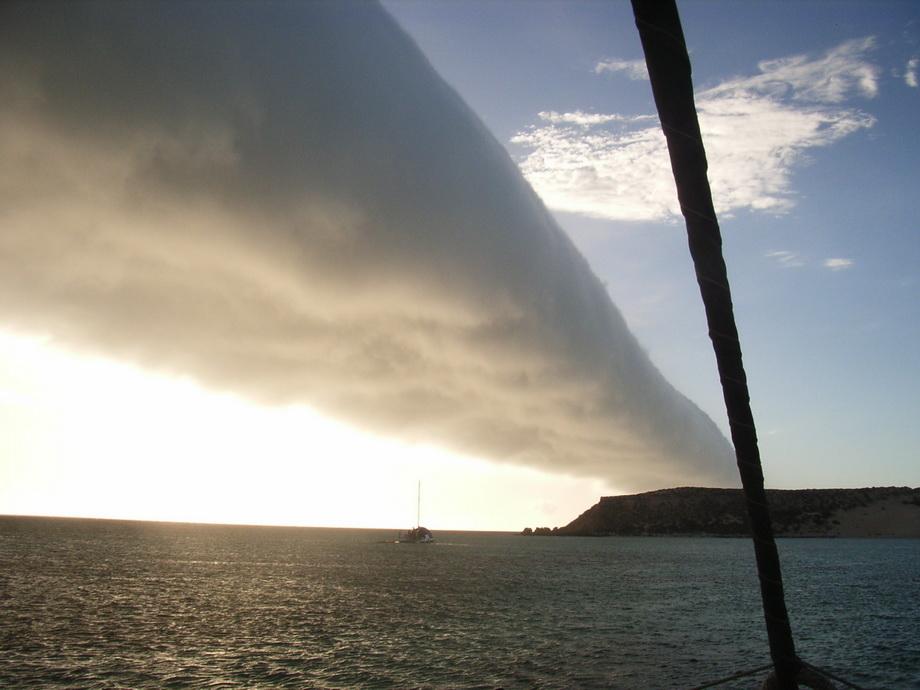 Утренняя глория в Австралии. Фото