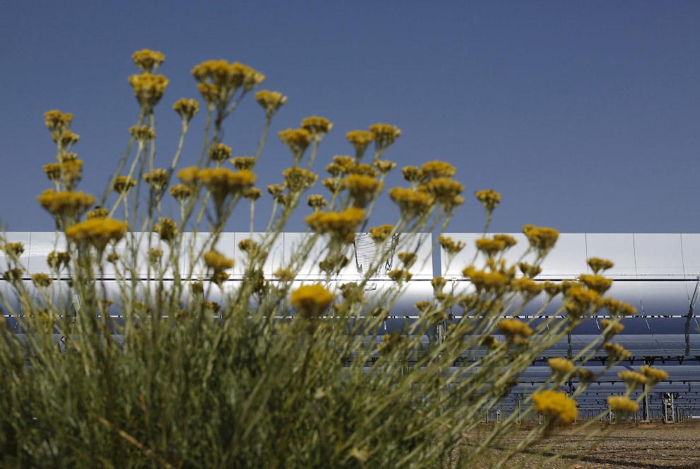 7. Полевые цветы в округе как бы намекают на экологичность этого завода по производству электроэнерг